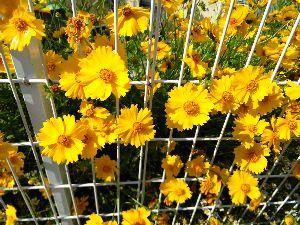 いちご大好き♪ おはよ♪  まるで夏だよね^^;  クーラー無しでいつまで行ける?  お花も頑張ってるね(*^^*)
