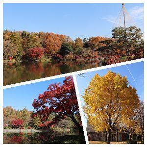 がんばっ♪ この週末、いつもの公園に行って見たけど もう紅葉は見頃過ぎてたわ まあ、家は都心に比べてたら寒いから