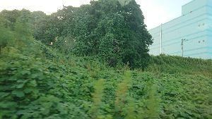 3222 - ユナイテッド・スーパーマーケット・ホールディングス(株) 茨城だと車が交通手段のほとんどで職場行くのも病院行くのもスーパーもコンビニ行くにも車で一家に自家用車