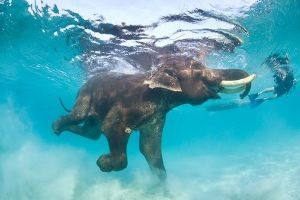 日本語の起源 ♪象は、泳げるんだから♪ゴネられてもね♪