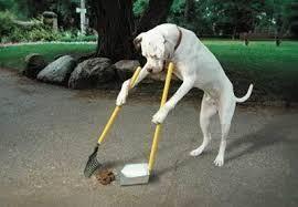 φ(・ω・ ) 通りすがり  おはようございます 通りを掃除🐾