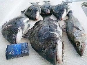 福岡 魚釣りのおはなし。 船の掃除に行ったんですが、チラチラ見える魚影を見たら  やはり掃除は中断しますね。