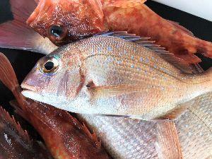 福岡 魚釣りのおはなし。 美味しい
