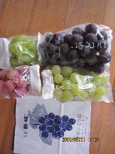 クリスマスローズ こんばんは! 週末の台風が心配です。  秋は果物の季節。 今日は宇部市小野の平野ブドウ園に。 今年は