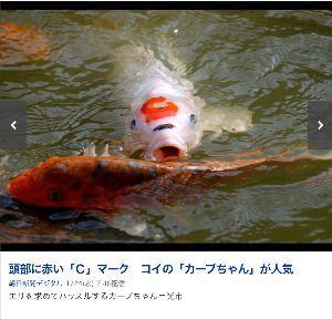 """☆鯉人募集板☆ あらっ、こんな""""柄""""の鯉が今人気らしいです‼️"""