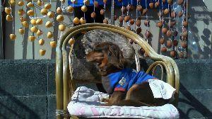 おじさま、お話しましょ。 ああ~~最後の夢が消えた 中銀スタジアム、天皇杯・甲府0-1鹿島  220個の吊るし柿の前で記念撮影