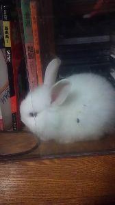 ウサギにメロメロ☆ はい、私の足です・・・可愛かったのでマイメロのスリッパ買いました。 チビッチ、日に日に悪さをする回数