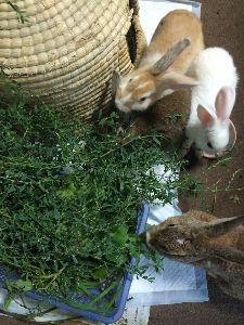 ウサギにメロメロ☆ うっちゃんのご冥福を祈ります、お月様で家の子達と楽しく過ごしてね。SUNさんあまり落ち込まないでね。