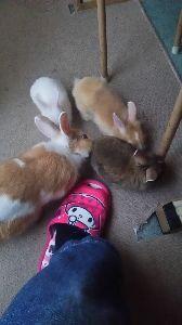 ウサギにメロメロ☆ 3か月で飛びチッコ・・・ポンタ飛びチッコしないんです、全てにゆっくりな子でテリトリー主張しない子です