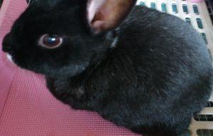 ウサギにメロメロ☆ はじめまして。ようこそ~  5月で10歳になるおじいちゃんウサギと暮らしている sunと言います。