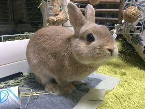 ウサギにメロメロ☆ こんにちは!! うさぎ初心者です!!  皆さんのうさぎちゃんみたいですー(*^^*)  わたしのうさ