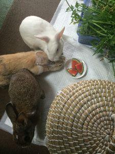 ウサギにメロメロ☆ 食べてる草・・・近くに一杯生えてるし、ご近所から貰うしありがたいことに家のウサの為に育てて下さってる