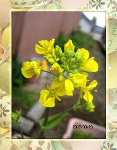 のんびり暇潰しでもしようかな・・・・・・ 陽射しの弱い小寒い一日・・・  冬に逆守りをしたような冷たさ・・・  庭の花も元気のない様子だね・・