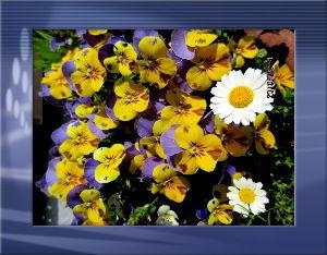 のんびり暇潰しでもしようかな・・・・・・ 陽射しが強く暖かな日和に・・・  庭の花も暖かな陽射しに大喜びだね・・・  一斉に咲き出して大賑わい