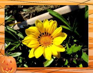 のんびり暇潰しでもしようかな・・・・・・ 何時まで続くのか暖かい小春日和・・・  冬至だというのにこの暖かさは異常なほど・・・  庭の花たちも