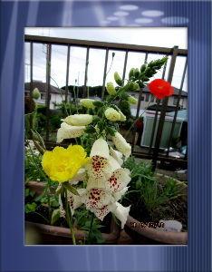 のんびり暇潰しでもしようかな・・・・・・ 愚図付き気味の小寒い天気・・・  時たまパラ付く不安定な天気だね・・・  庭の花もしぼんだなりでお辞