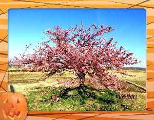 のんびり暇潰しでもしようかな・・・・・・ 昨日は四月のバカ陽気に・・・  セーター不要の温かさに・・・  公園の河津桜に会いにお出かけ・・・