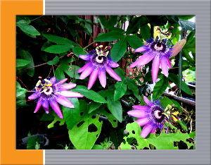のんびり暇潰しでもしようかな・・・・・・ 台風一過の爽やか秋らしい日和・・・  心地よい風が庭を通リ抜けて気分爽快・・・  庭の花たちも被害が
