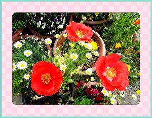 のんびり暇潰しでもしようかな・・・・・・ 今朝は薄日の射す程度ですが爽やかだね・・・  陽射しが無いので庭の花もまだ寝たふりしてるね・・・