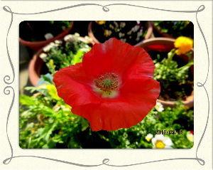 のんびり暇潰しでもしようかな・・・・・・ 日中は四月の陽気になありますが  朝晩との寒暖の差の酷い日が続いてます・・・  庭の花も一部にお目覚