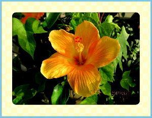 のんびり暇潰しでもしようかな・・・・・・ 久しぶりに土砂降りの通り雨・・・・  たった10分ほどですが庭に水たまりができるほど・・・  庭の花