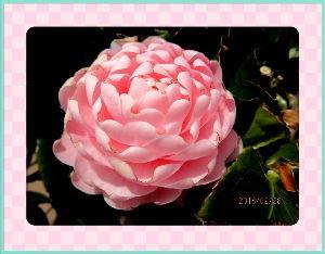 のんびり暇潰しでもしようかな・・・・・・ 寒さの厳しかった二月がやっと終わったね・・・  暖かな春の訪れが身じかに感ずるね・・・  庭の花も季
