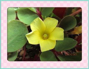 のんびり暇潰しでもしようかな・・・・・・ 暖かな陽射しの射しこむ小春日和に・・・  庭の花たちも暖かな陽射しに全開だね・・・  やはり乾燥気味