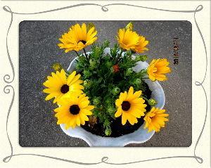 のんびり暇潰しでもしようかな・・・・・・  久々に眩しいほどの陽射しが・・・  陽射しが強く気温も上昇してポカポカ陽気に・・・  庭の花たちも