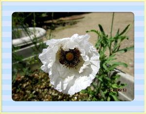 のんびり暇潰しでもしようかな・・・・・・ 爽やかな風が吹き抜ける夏日に・・・  腰に少々違和感を感じたのでのんびり休養・・・  庭の花には給水