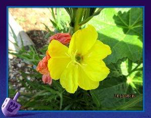 のんびり暇潰しでもしようかな・・・・・・ 今朝は雨戸をあけて風の冷たさにびっくり・・・  陽射しが無いので風の冷たさは一日中・・・  庭の花も