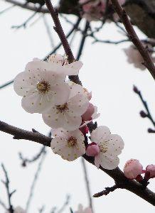人生は70代から おはようございま~す(^O^)  昨夜…、いや今朝未明に戻って参りました。 東京を出る