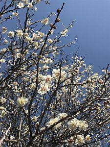 思いきってはじめてみよう 春めいてまいりました(^-^)☆。.:*・゜