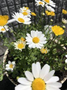 思いきってはじめてみよう 眩しいくらいに晴れていますょ(^-^)☆。.:*・゜  庭のお花も元気いっぱいです(^-^)  午後