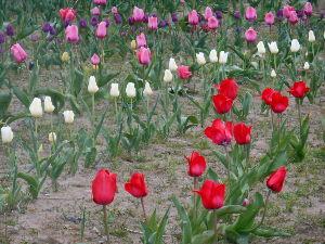 こんにちは(^_-)-☆ ~~~ヾ(^∇^)おはようございます~♪ 今日一日 ☂です。  此方では田んぼを耕して