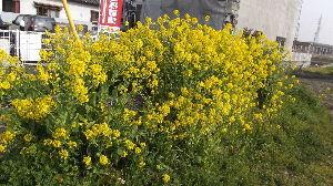 優しい風に吹かれて~   蒼さんこんばんは 毎年春が荒れるんですが 今年は特に荒れ方がひどいですね しかも長い日日まで お
