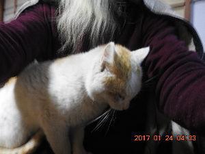 猫大好き…犬もネ 先程シロが帰りました 猫は腹時計ですかね?