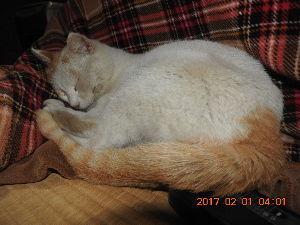 猫大好き…犬もネ 4時ころシロ(=^・・^=)が帰りデイトの夢を見ています。