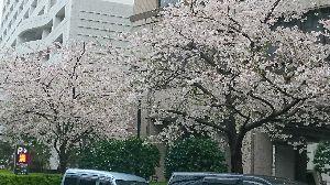 2016年5月4日(水) 中日 vs 阪神 8回戦 天候が好ければ、もっとキレイな絵になったのですが…。