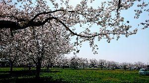 月曜日、ん~ど~しよ‥?    (関東) 重たいなぁー(^。^;)  身体。  今日、桜をちょっぴり、そしてゆっくり観てみた。  きれいだな。