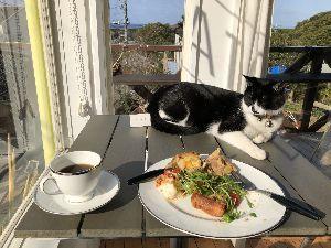 ハワイ旅行案内所 今日アメリカに帰りました。 結局一泊で館山の猫のペンションに泊まりました。温泉は行けなくて残念でした