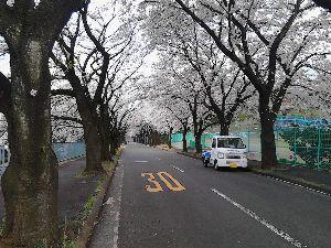 いつか金沢に住みたい 今朝は何日ぶりかで、晴れました。 太陽の光を浴びるのは、気持ちいい。  海さん ここ数年、外人観光客