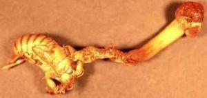4902 - コニカミノルタ(株) 釜釜波ー  釜釜セミはきのこの養分なのw