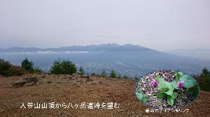 ★☆居酒屋『Love&Peace』信州店_開店のお じんべい様、岩村田でお会いしましょう! 今回のレポートも、やはり貴ブログでお願いいたしますm(_ _