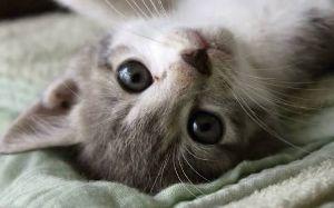 FX 猫板  猫好き集まれ~(*^^*) はい(✿˘艸˘✿) 私も今Sで思いっきり踏まれてますよ!