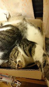 FX 猫板  猫好き集まれ~(*^^*) みみみさん、おはようございます(*^_^*) 猫板発見! ちょいちょいのぞきにきますね(≧&nabl