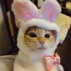 FX 猫板  猫好き集まれ~(*^^*) うさぎ猫