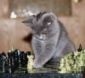 FX 猫板  猫好き集まれ~(*^^*) 板引越ししても見てくれる方がいるんですね… 嬉しいなぁ(❁´ω
