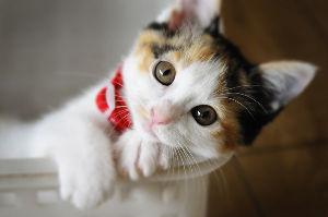 FX 猫板  猫好き集まれ~(*^^*) 何元祖猫板に現れてるねん(ノ)´∀`(ヾ) ヾ(=゚・゚=)ノニャン♪