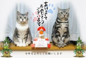 FX 猫板  猫好き集まれ~(*^^*) ピエロさんもお久しぶりです(*´▽`*)  何か皆古い猫板に顔出してくれるので嬉しいです