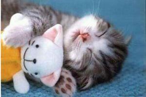 温泉が好き♪ 猫が好きなのでしょうか・・・?  癒されますよね。 ♪(゚▽^*)ノ⌒☆
